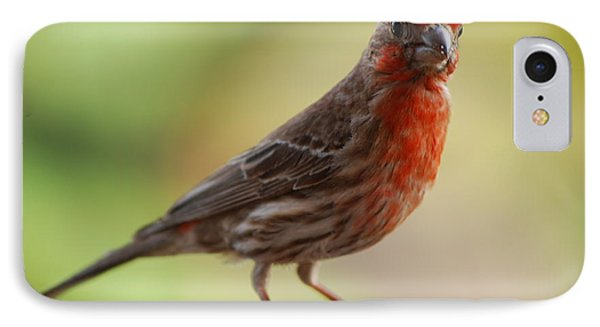 Small Brown And Red Bird IPhone Case by DejaVu Designs