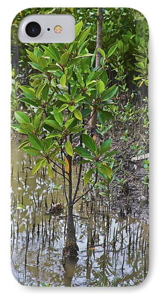 Small Mangrove Tree, Sunderbans IPhone Case by Connie Bransilver