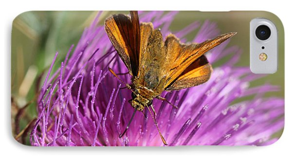 IPhone Case featuring the photograph Small Skipper - Thymelicus Sylvestris by Jivko Nakev