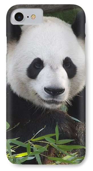 Smiling Giant Panda IPhone Case by Lingfai Leung
