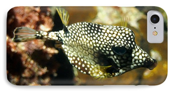 IPhone Case featuring the photograph Smooth Trunkfish by Amy McDaniel