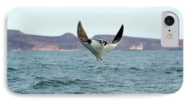 Smoothtail Mobula Ray Leaping IPhone Case