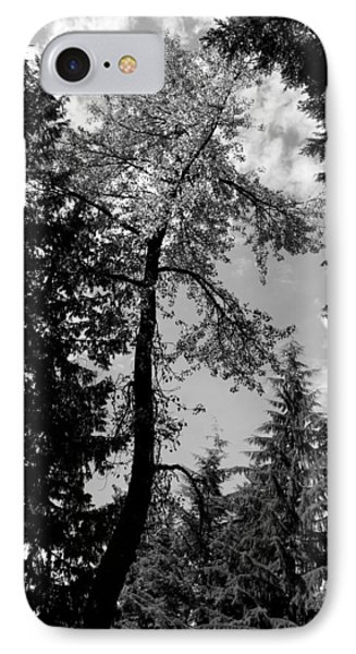 IPhone Case featuring the photograph Snake Tree - Lost Lake -whistler by Amanda Holmes Tzafrir