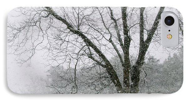Snow And Pecan Tree IPhone Case