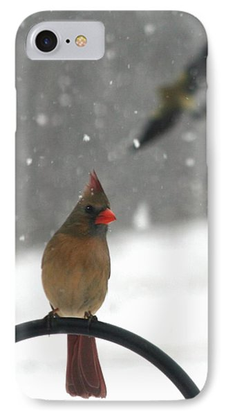 Snow Bird II IPhone Case by Diane Merkle
