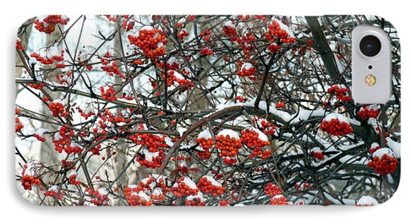 Snow- Capped Mountain Ash Berries IPhone Case by Will Borden