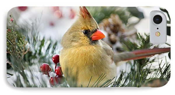 IPhone Case featuring the photograph Snow Cardinal by Christina Rollo