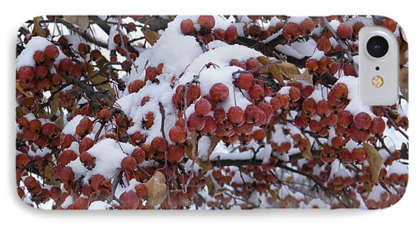Snow Covered Berries IPhone Case