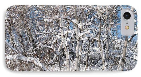 Snow Covered Birch Trees IPhone Case by Janice Adomeit