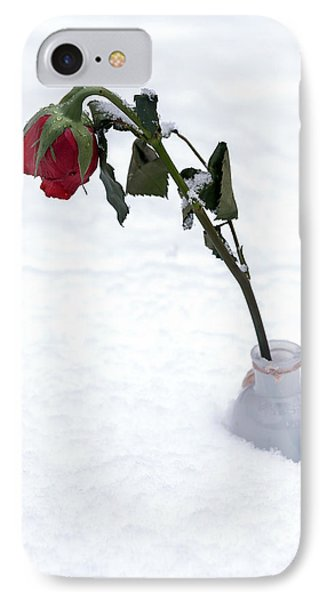 Snow-covered Rose IPhone Case