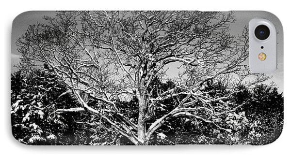 Snow Covered Tree IPhone Case