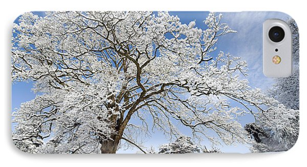 Snow Covered Winter Oak Tree Phone Case by Tim Gainey