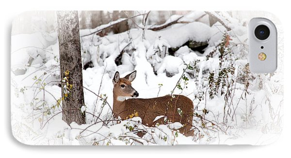 Snow Doe Phone Case by Karol Livote