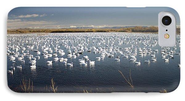 Snow Geese - Bosque Del Apache IPhone Case
