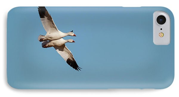 Snow Geese (chen Caerulescens IPhone Case
