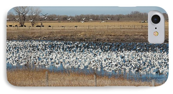 Snow Geese Flock IPhone Case by Jim West