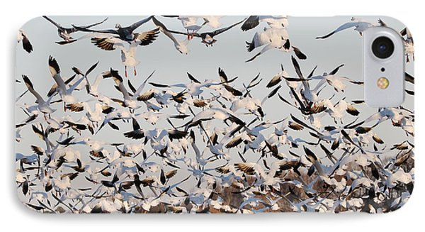 Snow Geese Takeoff From Farmers Corn Field. IPhone Case by Allan Levin