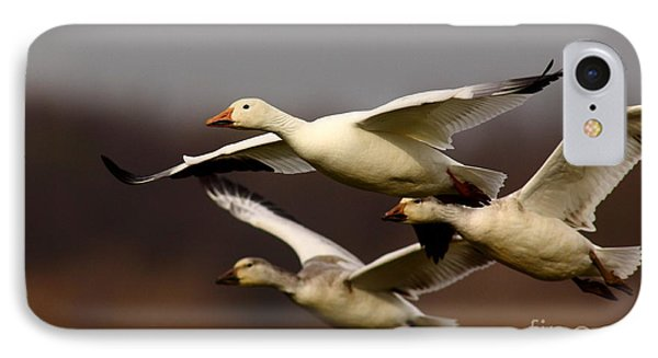 Snow Goose Formation Migration IPhone Case