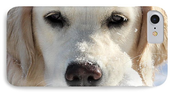 Snow Puppy IPhone Case by Christy Edwards