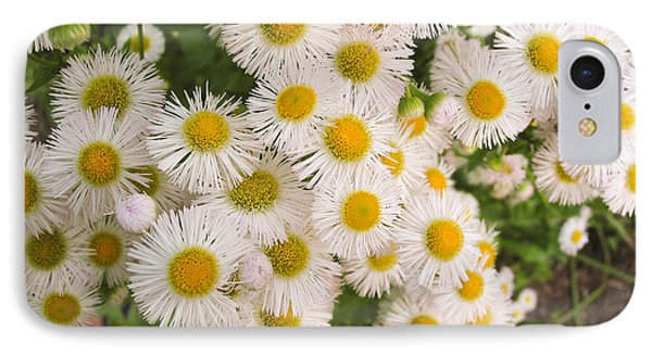 Snow White Asters IPhone Case by Allan Levin