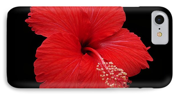 IPhone Case featuring the photograph Snowflake Hibiscus by Judy Whitton