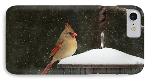 Snowy Cardinal IPhone 7 Case by Benanne Stiens