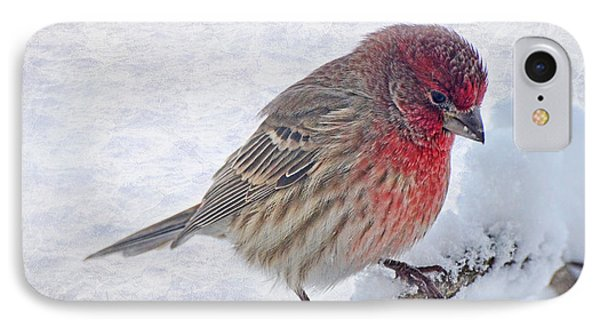 Snowy Day Housefinch Phone Case by Debbie Portwood