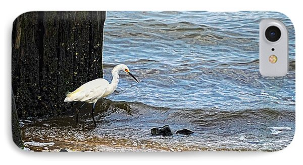 Snowy Egret At The Shore IPhone Case