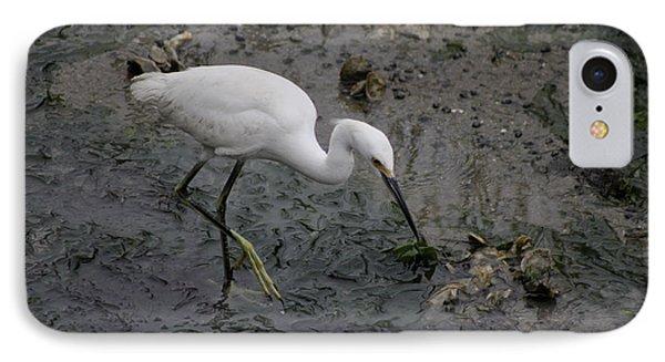 Snowy Egret Feeding IPhone Case