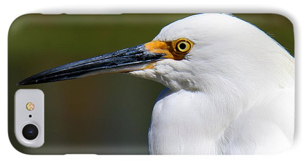 IPhone Case featuring the photograph Snowy Egret Portrait by Bob and Jan Shriner