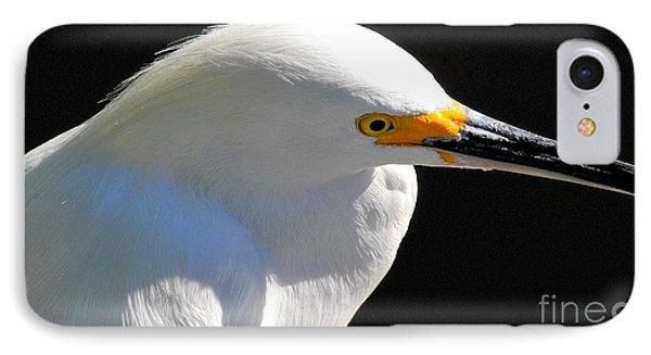 Snowy Egret IPhone Case by Quinn Sedam