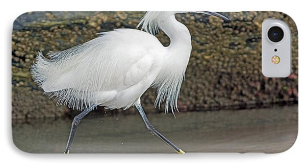 Snowy Egret Strutting IPhone Case by Stephen  Johnson
