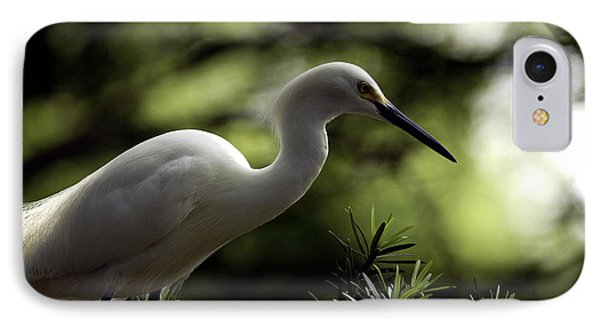IPhone Case featuring the photograph Snowy Egret by Travis Burgess