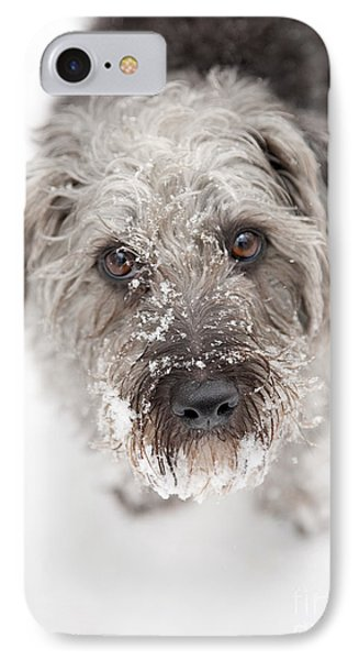 Snowy Faced Pup IPhone Case by Natalie Kinnear