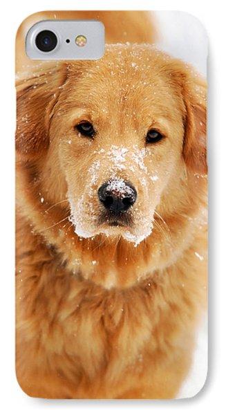 Snowy Golden Retriever Phone Case by Christina Rollo