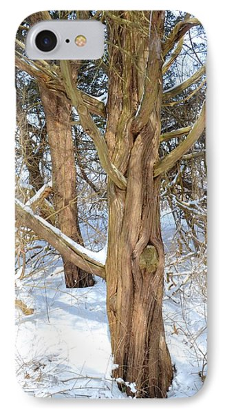Snowy Knotted Trees IPhone Case by Toby McGuire