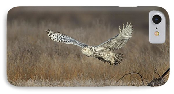 Snowy On The Wing IPhone Case by Daniel Behm