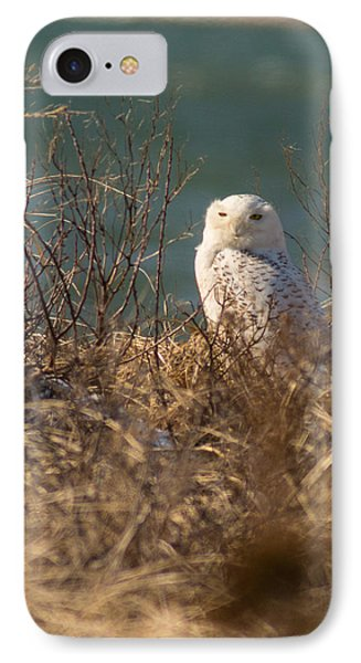 Snowy Owl At The Beach IPhone Case by Allan Morrison