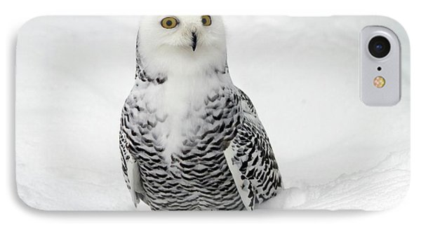 Snowy Owl (bubo Scandiacus) IPhone Case by Photostock-israel