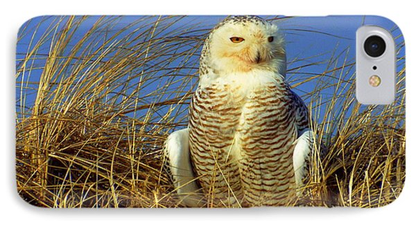Snowy Owl  IPhone Case by CapeScapes Fine Art Photography