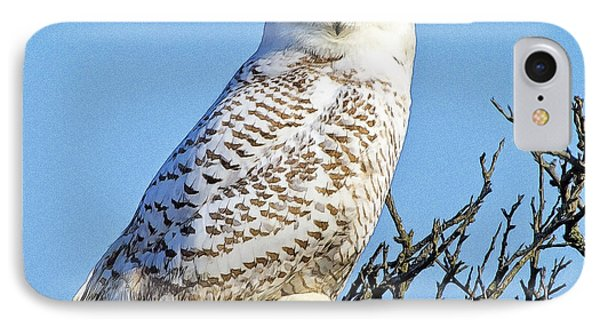 IPhone Case featuring the photograph Snowy Owl by Constantine Gregory