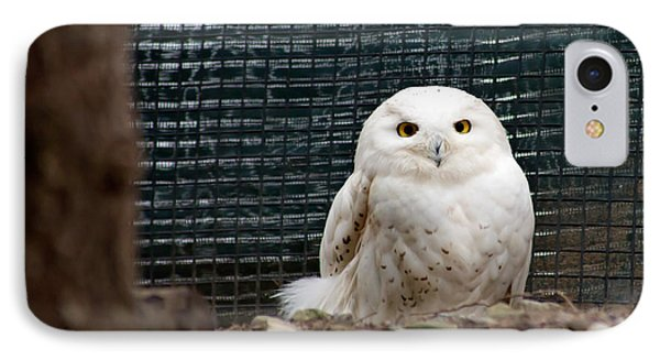 IPhone Case featuring the photograph Snowy Owl by Courtney Webster