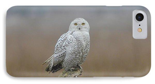 Snowy Owl  IPhone Case by Daniel Behm