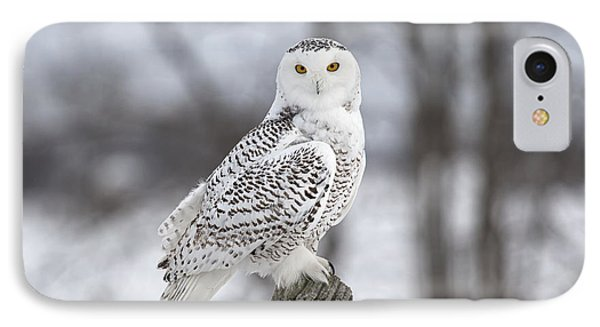 Snowy Owl IPhone Case by Eunice Gibb