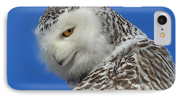 Snowy Owl Greeting Card IPhone Case