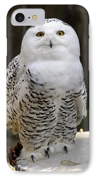 Snowy Owl IPhone Case by Heiti Paves