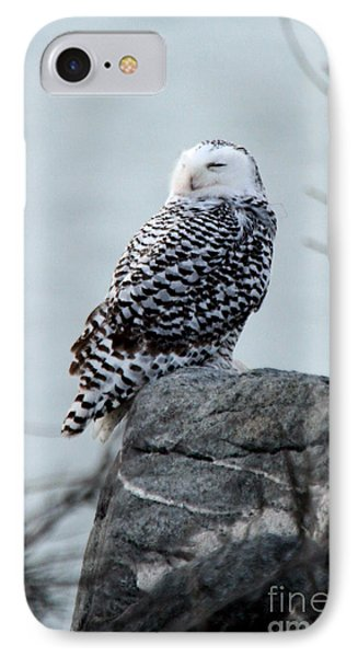 Snowy Owl I IPhone Case by Butch Lombardi