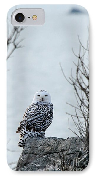 Snowy Owl II IPhone Case