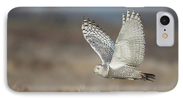 Snowy Owl In Flight IPhone Case by Daniel Behm