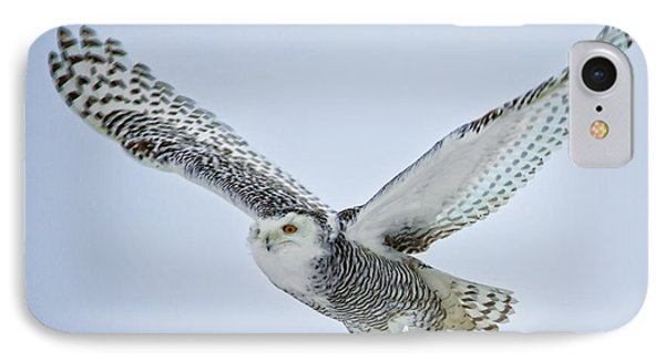 Snowy Owl In Flight IPhone Case by Everet Regal